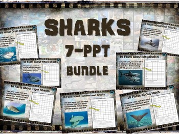 SHARKS BUNDLE (7 PPTs) BULL HAMMERHEAD TIGER WHALE GREAT-WHITE RAY MEGALODON