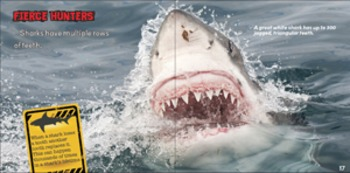 SHARKS! Big Teeth. Fierce Hunters