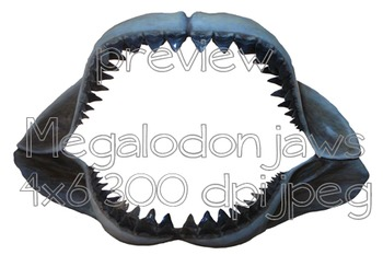 Photos Photographs SHARKS and RAYS Clip Art for Personal and Commercial Use