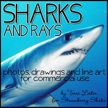 Photos Photographs SHARKS and RAYS Clip Art for Personal a