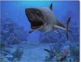 SHARKS & other sea animals