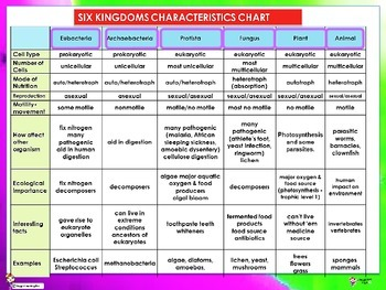 6 Kingdoms Of Life Worksheet: six kingdoms of life classificaton by maggies files tpt,