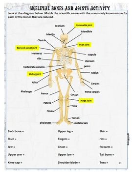 SKELETAL SYSTEM, AN INTERACTIVE NOTEBOOK