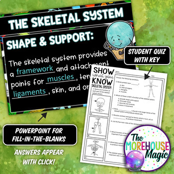SKELETAL SYSTEM SCIENCE DOODLE NOTES, INB, MINI ANCHOR CHART + QUIZ!