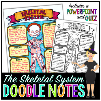 The Skeletal System Science Doodle Notes with PowerPoint & Quiz