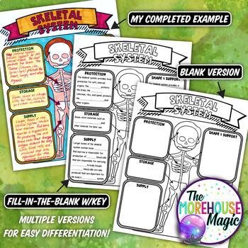 The Skeletal System Doodle Notes | Science Doodle Notes