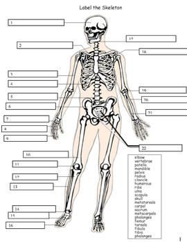 SKIN AND SKELETAL SYSTEM COMPLETE UNIT