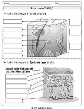 SKIN: Labeling diagram, Skin Layers Flow Chart, Review ...