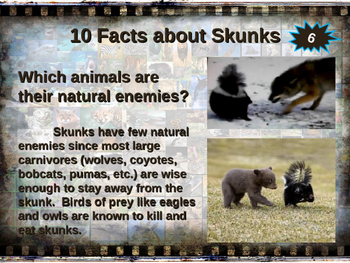 SKUNKS - visually engaging PPT w facts, video links, handouts & more