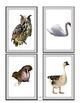 SPEECH THERAPY SLAM JAM! ANIMALS