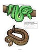 SNAKES Math, Science and Literacy Activities and Centers f