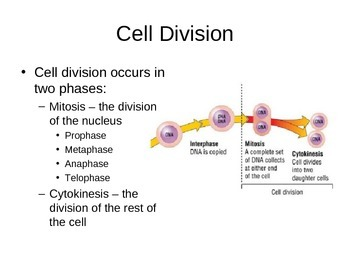 SNC2D Cell Cycle PowerPoint