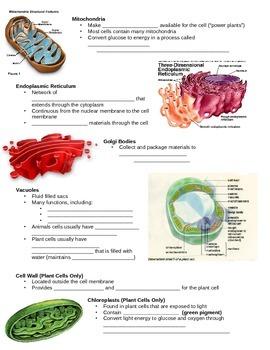 SNC2D Cells student notes