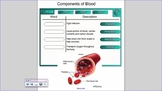 SNC2D Circulatory System SMART notebook file