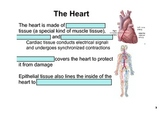 SNC2D Circulatory System student notes