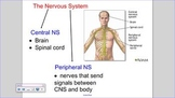 SNC2D Nervous System SMART notebook