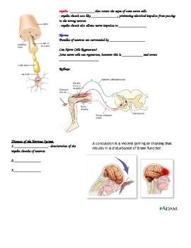 SNC2D Nervous System student handout