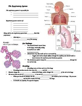 SNC2D Respiratory System student handout