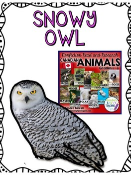 SNOWY OWL - nonfiction animal research