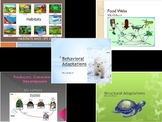 SOL 4.5: Ecosystems and Adaptations Powerpoint Bundle