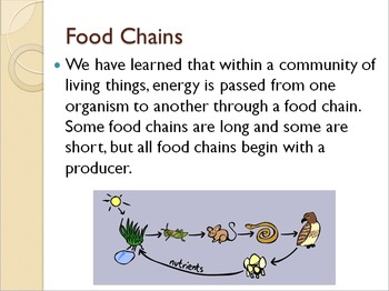 SOL 4.5: Food Webs Powerpoint