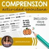 SPANISH Comprehension Trifold - El Ciclo de Vida de Una Calabaza