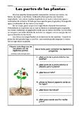 SPANISH Parts of a Plant - Partes de las plantas