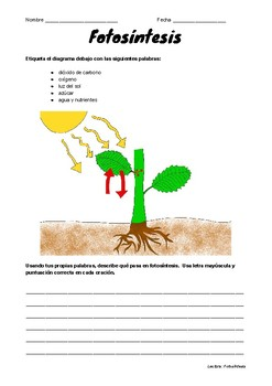 SPANISH Photosynthesis Reading Comprehension