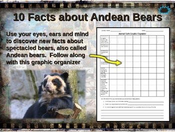 "SPECTACLED ""ANDEAN"" BEAR: 10 facts, engaging PPT, links, free graphic organizer)"