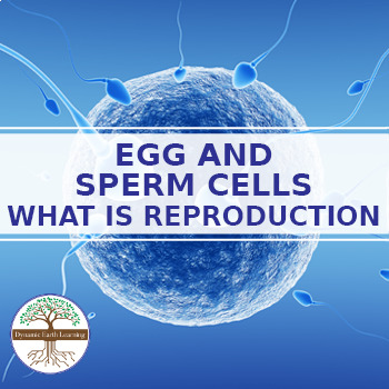 SPERM AND EGG CELLS: FuseSchool Biology Video Guide