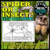Nocturnal Animals: SPIDER OR INSECT? (Cut & Glue Science)