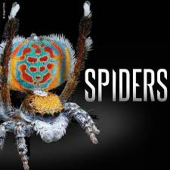 SPIDERS lesson for the Smart Board - images, videos, facts and a quiz