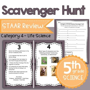 Category 4 Staar Worksheets & Teaching Resources | TpT
