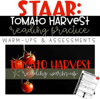 STAAR Reading Warm-up/Assessment - 6th Grade: Tomato Harvest
