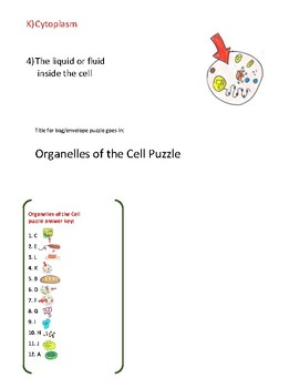 STAAR puzzle: Cell organelles structure and function