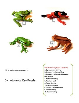 STAAR puzzle: dichotomous key of plastic frogs