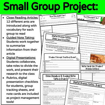 STEAM Project All About Ants