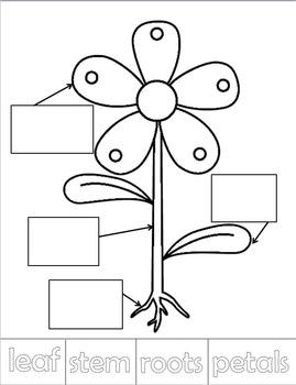 STEAM for Primary Grades- Label a Plant