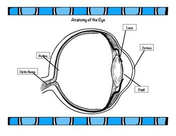 STEM Activity - DIY Eye