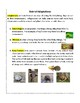 STEM: Animal Adaptations