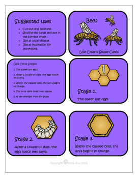 STEM - Be a Bee Detective - Life Cycle, Biomimicry, Inspiration for Ideas