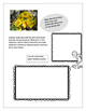 STEAM - Biomimicry for Young Children - Spring Flowers