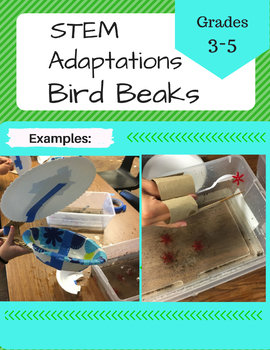 STEM Bird Beak Adaptations