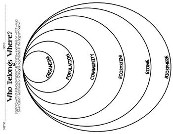 STEM: Ecological Organization Formative Assessments