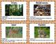 STEM Ecosystem Food Webs & Feeding Relationships Student Activity