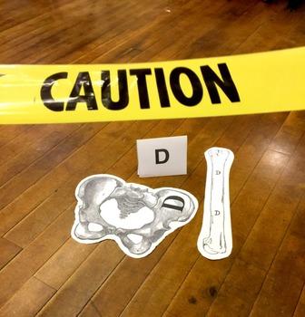 STEM Function Notation Crime Scene Lab
