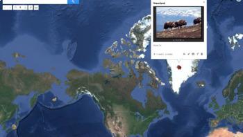 STEM LAB - Winter Animals  -Digital - Easily Used For Google Classroom