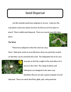 STEM: Next Generation 2nd Grade:  Seed Dispersal by the Wind
