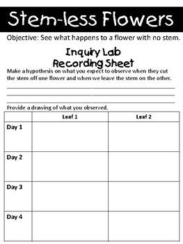 STEM Plant Stem Inquiry Lab Activity - NGSS Aligned