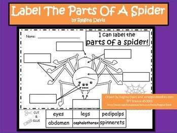 STEM Science, Technology, Engineering & Math: Itsy Bitsy Spider Nursery Rhyme